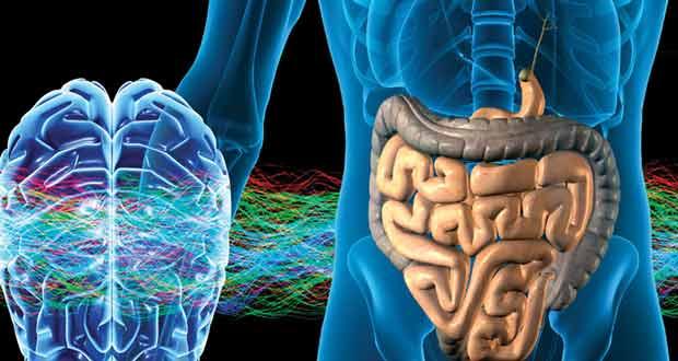 Bağırsakların beyne etkisi, beyin ile bağırsakların bağlantısı, bağırsakların çalışması
